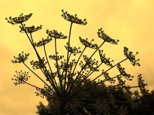 florishes